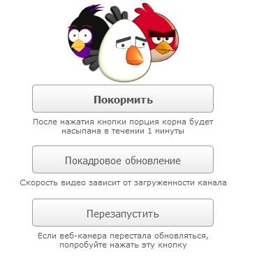 Покормите птичек онлайн!