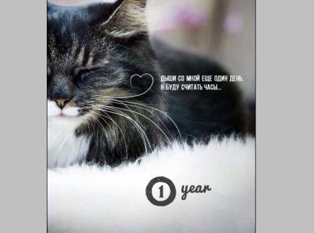 Дизайн открытки месяц/полгода/год отношениям